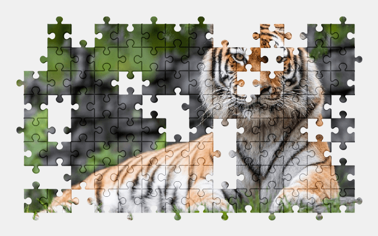 Пазлы Онлайн Амурский Тигр