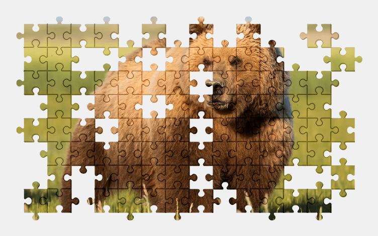 Пазлы Онлайн Медведь