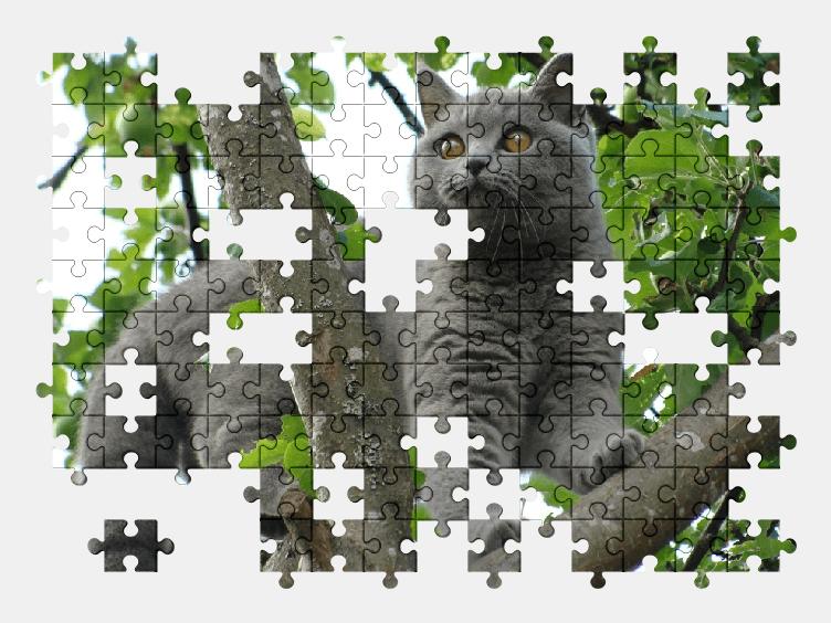 Пазлы Онлайн Кошка на Дереве