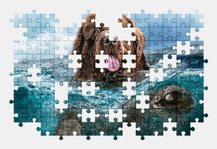 Пазлы Онлайн Собака в Воде