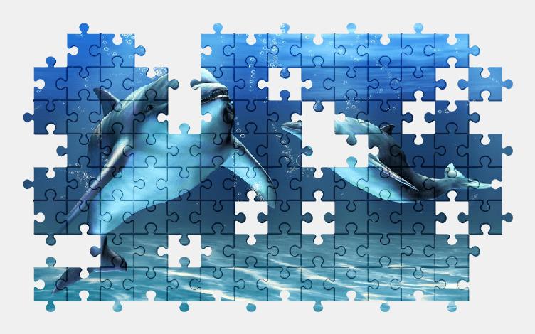 Пазлы Онлайн Дельфин