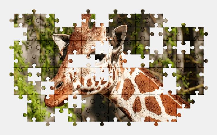 Пазлы Онлайн Жирафа
