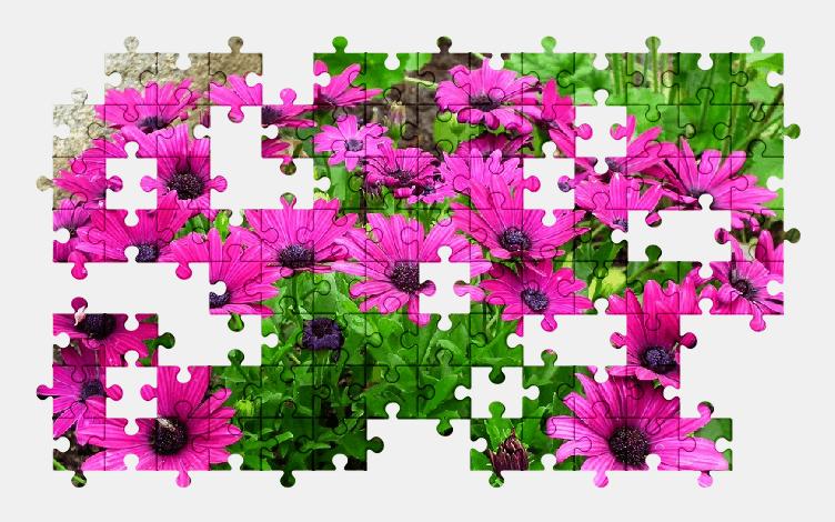 Пазлы Онлайн Цветы