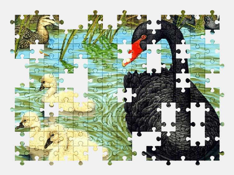 Пазлы Онлайн Черный Лебедь