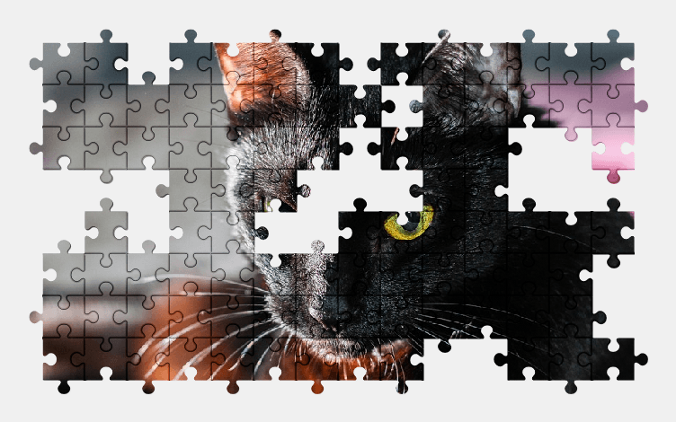 Пазлы Онлайн Кошка