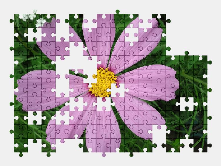 Пазлы Онлайн Цветок